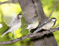 """Cuba: """"Pajarito que nunca cayó del nido, nunca aprendió a volar"""""""