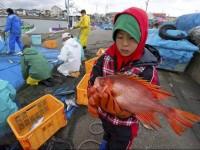 japon contaminacion
