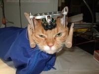 gato maltrato cientifico