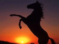 caballo salvaje