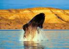 La inmisericorde destrucción de las ballenas