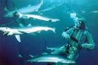 Tiburones: depredadores depredados