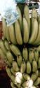 América banana: noticias de elecciones